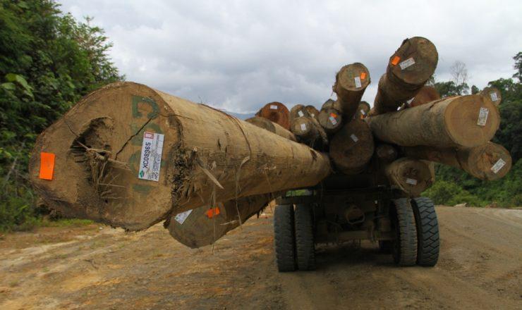 Samling logs_Global Witness_2_2014-2